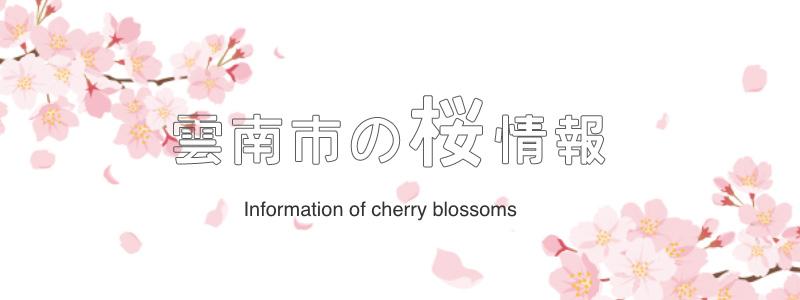 Sakura_info