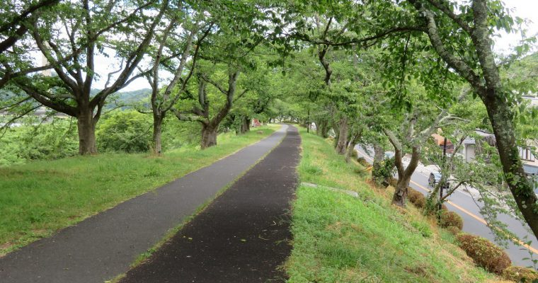 斐伊川堤防桜並木の今