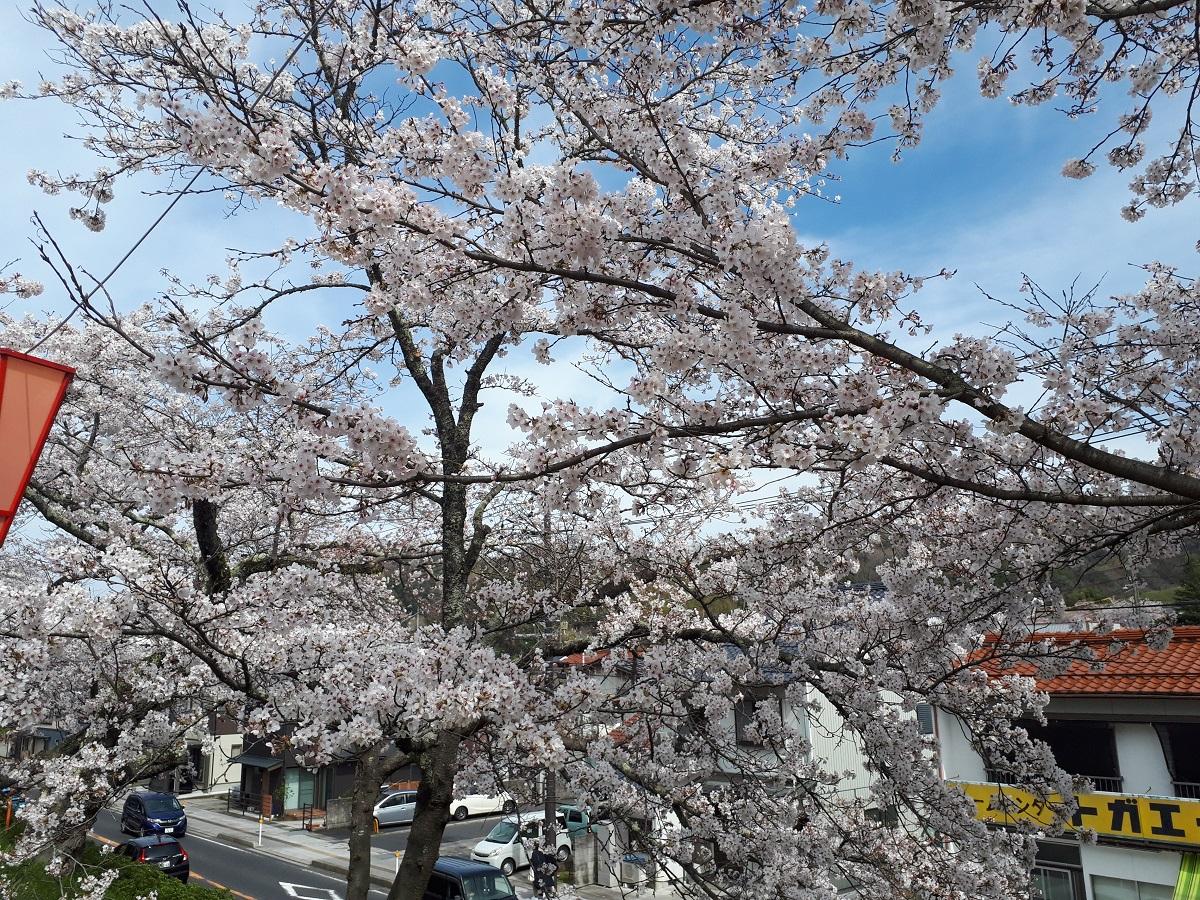 きょうの斐伊川堤防桜並木のようす(2021.3.27)